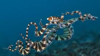 Трехметровые щупальца и тело как у человека: Ученые нашли осьминога из древних легенд