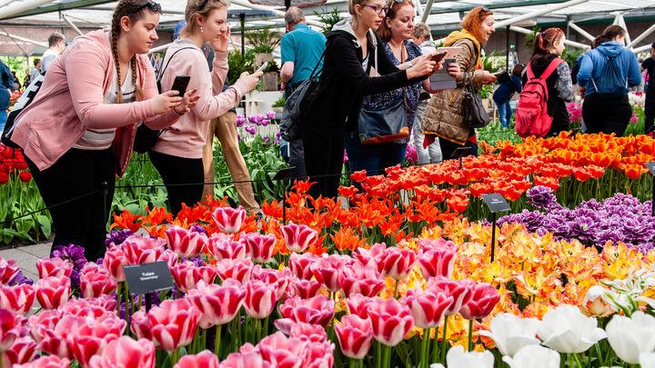 Давно практикуемая афера: власти Амстердама узнали шокирующую правду о разводе с тюльпанами каждого купившего