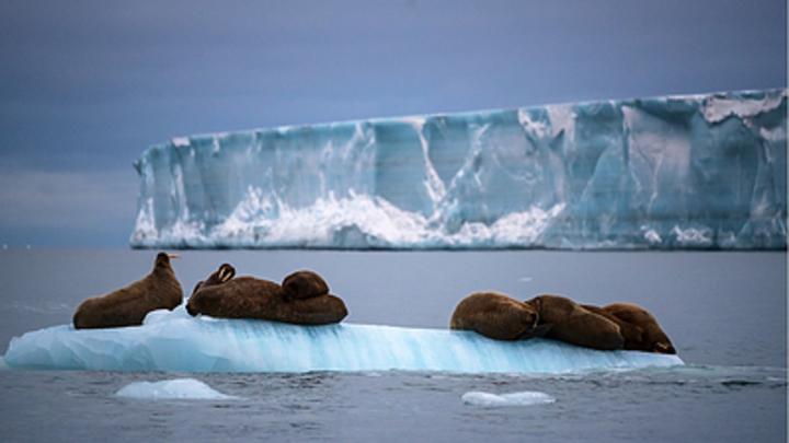 Коротченко: Арктика гарантирует развитие экономики России на 1,5 века