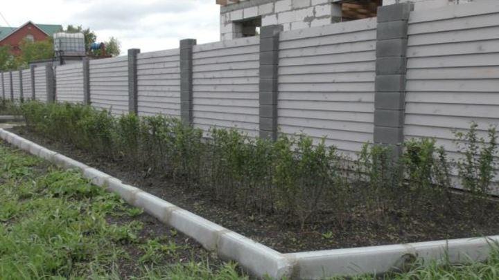 Похититель кизильника посадил кусты перед своим домом