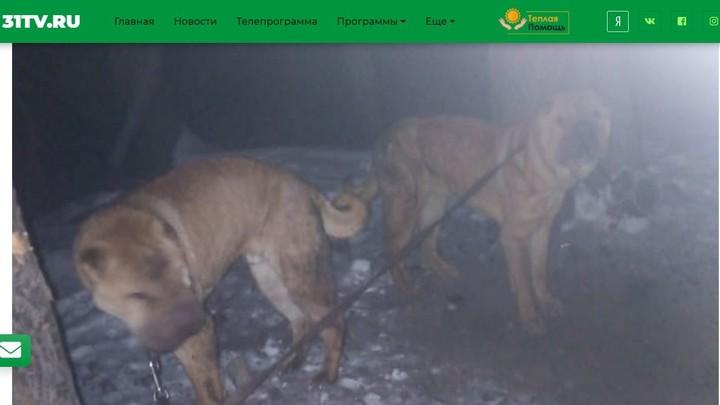 Хуже животных: в Челябинской области на морозе оставили пару шарпеев
