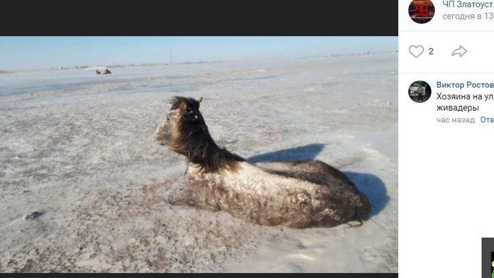Фото замерзших насмерть лошадей в Челябинской области власти назвали фейком