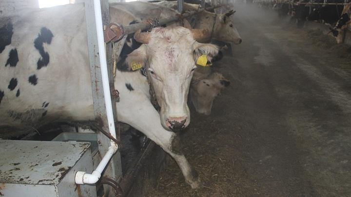 В Гомельской области животноводы три года скрывали гибель скота