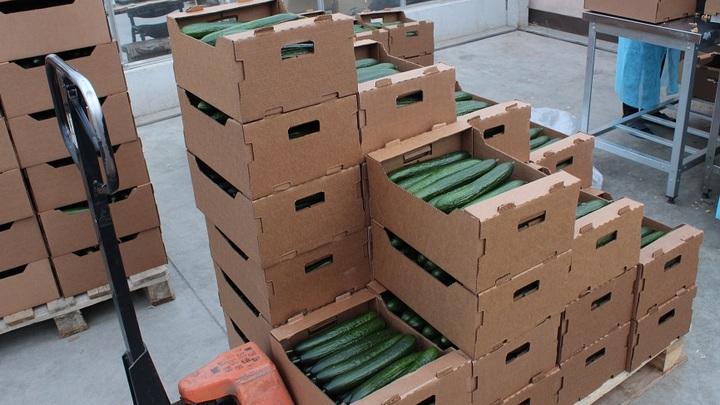 Россия запретила ввоз в страну 11 тонн белорусских огурцов