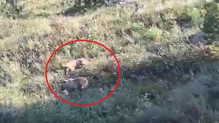 Пришлось звонить в полицию: под Магнитогорском медведи загнали туристов на скалы