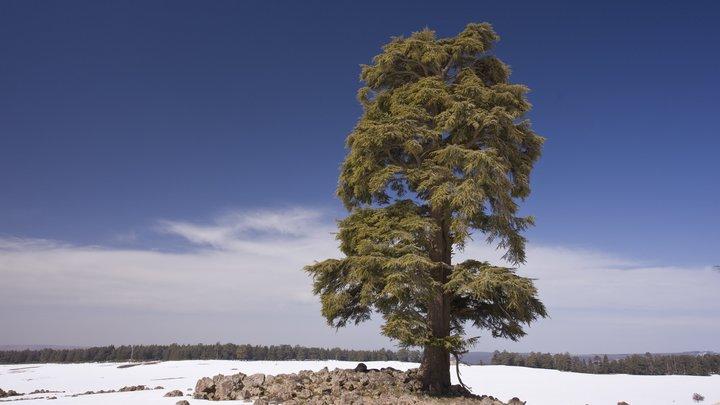 Гидрометцентр: Снегопад в Сахаре является признаком глобального потепления