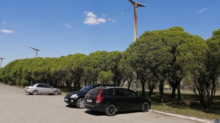 В Челябинской области экологический стандарт отгонит временщиков от деревьев