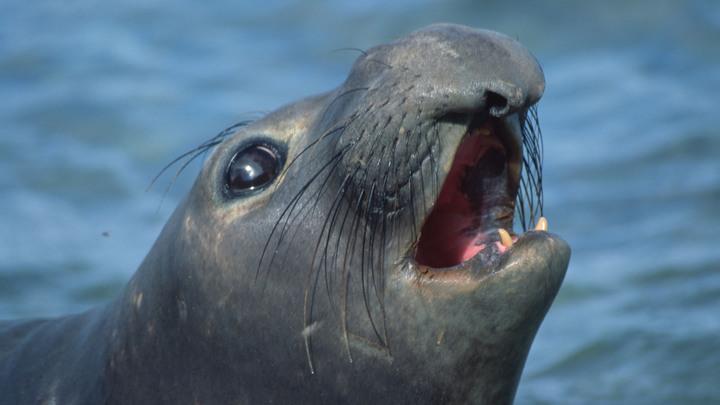 Истощенного тюлененка спасли на острове в Финском заливе