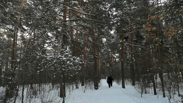 При реконструкции обкомовских дач в городском бору Челябинска возникли проблемы