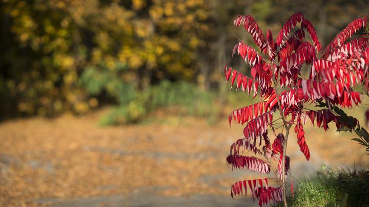 С 2010 года исчезли три вида растений из «Красной книги Ивановской области»