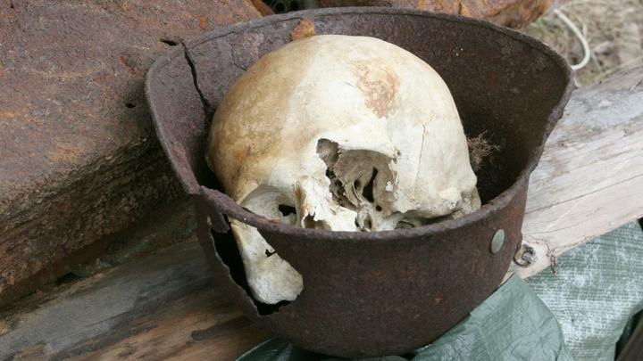 В Ленобласти пес принес с прогулки человеческий череп