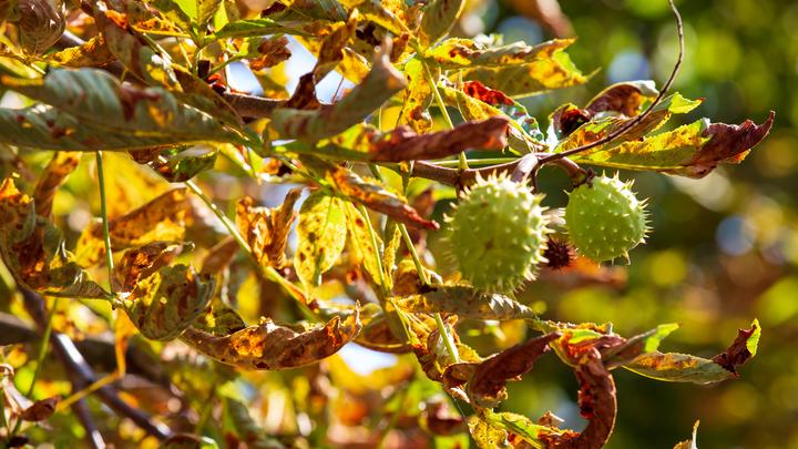 Чем отличится октябрь? Росгидрометцентр представил масштабный прогноз