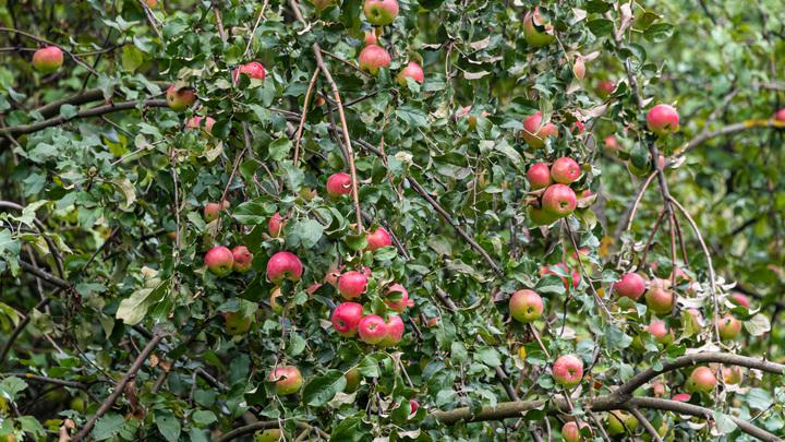 Плоды деятельности новой власти: В Молдове фермеры тоннами выбрасывают овощи и фрукты на свалку