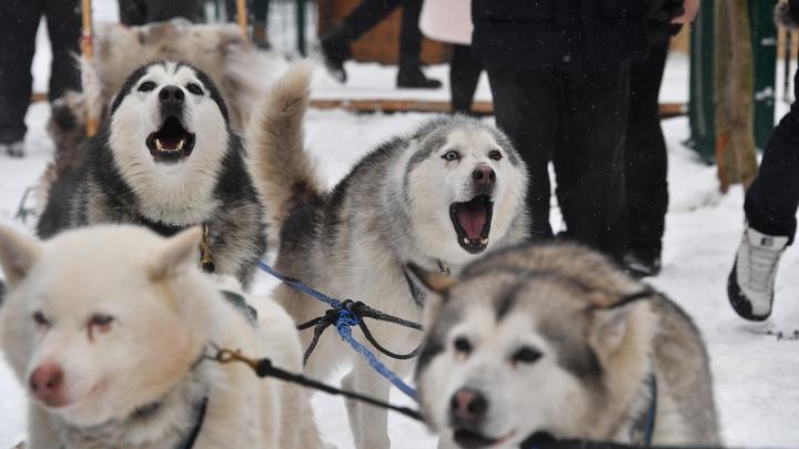 С собаками живут дольше: Ученые рассказали, как питомцы влияют на здоровье хозяев