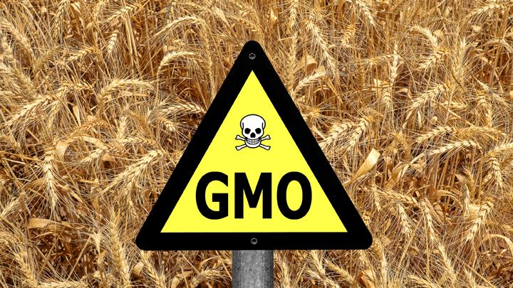 ГМО да каша: В каких продуктах в России могут быть трансгены