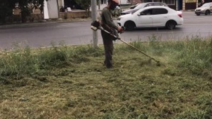 Голубев рассказал, кто будет бороться с амброзией в Ростовской области