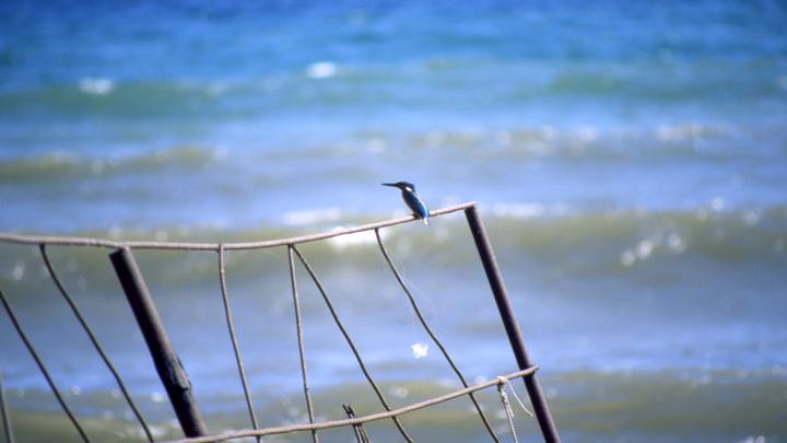 В Кабардинке очистили море от нефтяного пятна, в котором испачкались пловцы