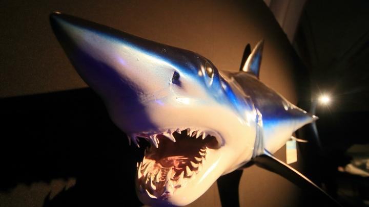 Паспорт показала: Древнейшая акула времён Ивана Грозного вызвала улыбки в соцсетях