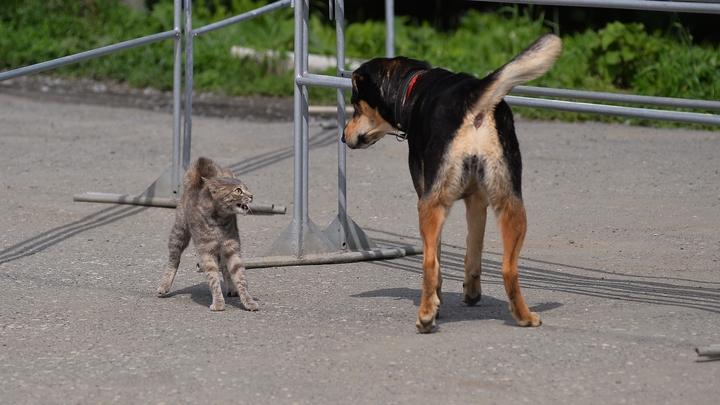 Пес и кот сдали должника судебным приставам
