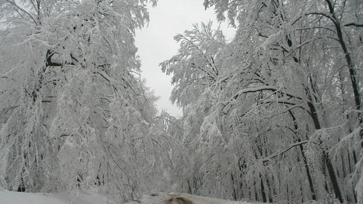 Мокрый снег и гололедица: В горах Сочи из-за непогоды будет опасно