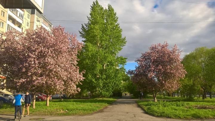 Архитекторы Челябинска предупреждают: деревья белить запрещено