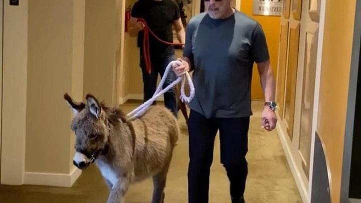 Арнольда Шварценеггера заперли дома из-за коронавируса. Он снимает видео с ослом, пони и собакой