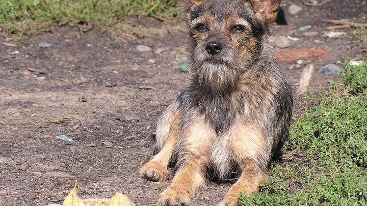 Когда ты пёс, а хозяин - крыса: Москвичи стали отказываться от собак из-за пандемии - Mash