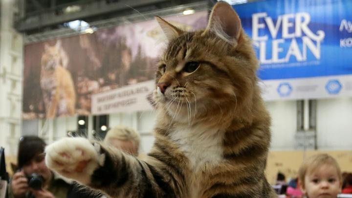 Вадим Степанцов разродился одой на гибель невинного котика Скрипаля
