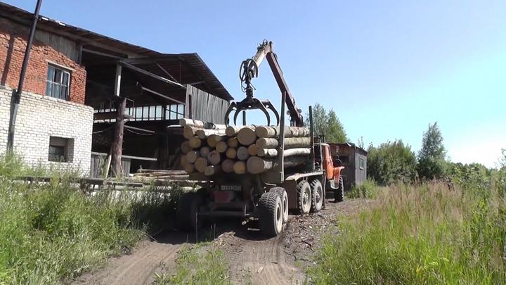В Ивановской области полиция и ФСБ накрыли банду черных лесорубов