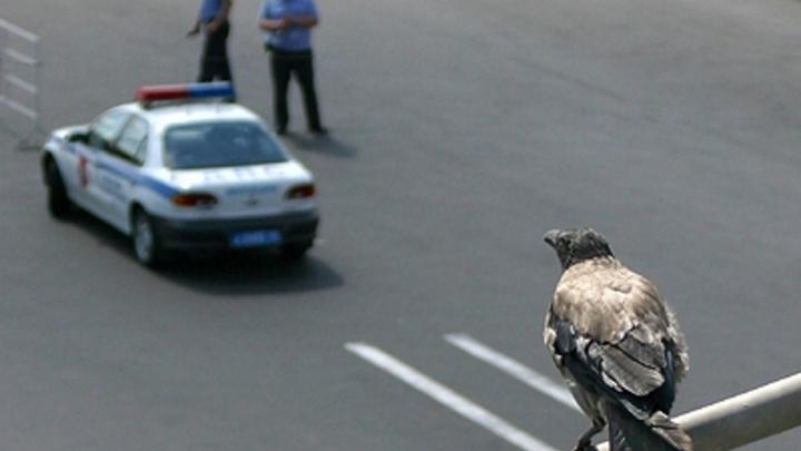 Дедовская подстава: Источник назвал реальную причину народного гнева на Ставрополье