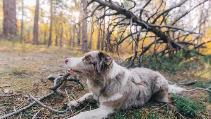 Магнитогорцы призвали полицию защитить собаку от хозяина