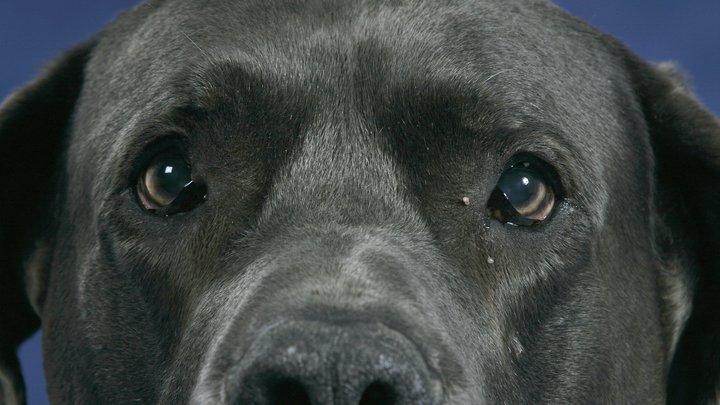 Вбил гвоздь в голову: Собака чудом выжила после издевательств подростка
