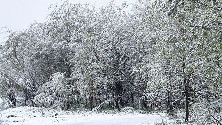 Синоптики предсказали, когда Москву скроет под снегом