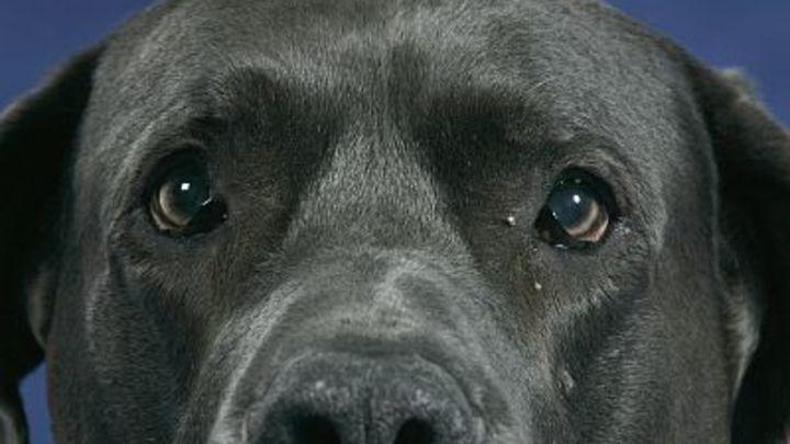 Следователи проверят случай нападения собак на пожилую женщину в центре Читы