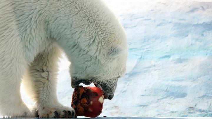 В нижегородском зоопарке Лимпопо из-за жары обитателей кормят фруктовым льдом