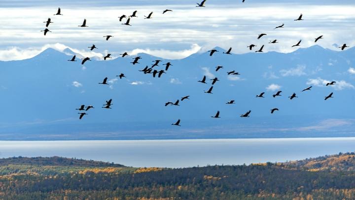 Эколог назвал изменой Родине строительство завода на берегу Байкала