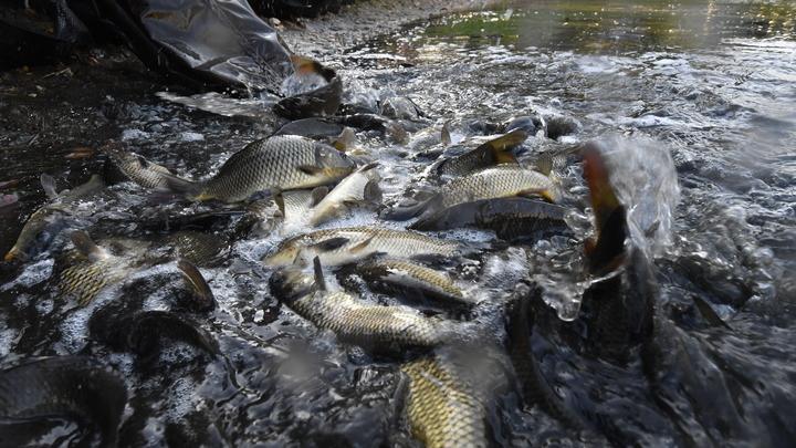 Отличить по глазам и плавникам: В Роскачестве назвали признаки испорченной рыбы