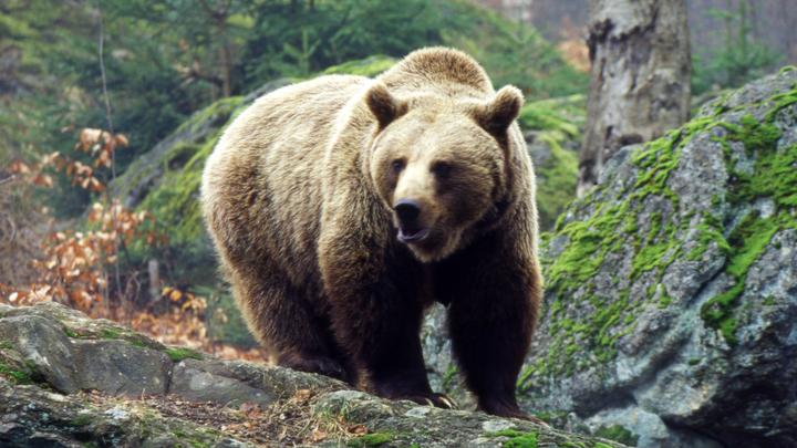 Армия русских медведей разоряет Латвию и штурмует столицу
