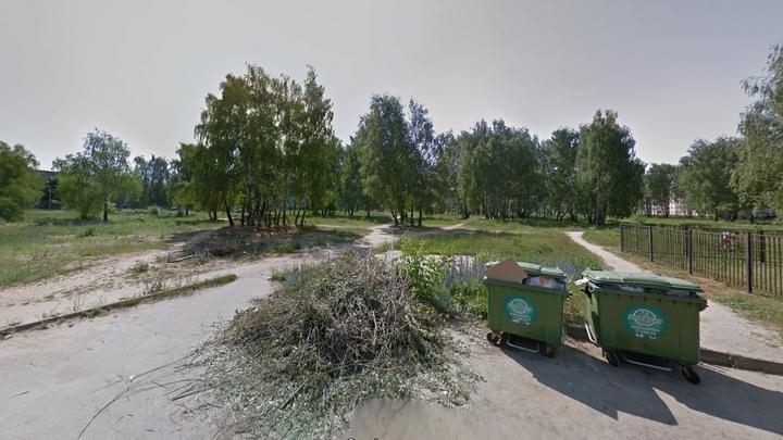 В Коврове для строительства школы вырубят 370 берез