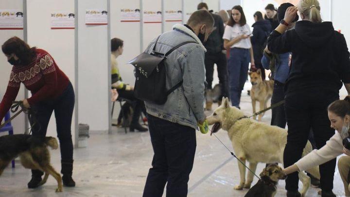 Самарцев попросили найти семью бездомным кошкам и собакам