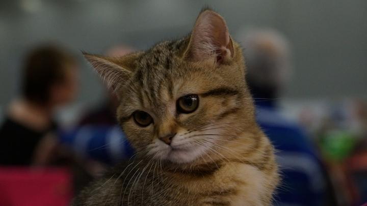 Он глаза открыл, и у него слёзы потекли: Дальнобойщик промчал 800 км ради больного котёнка
