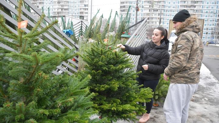 Ёлочные базары в Новосибирске заработают с 1 декабря