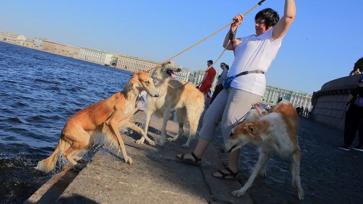 Жителям Подмосковья рассказали, как помочь собакам и кошкам пережить жару