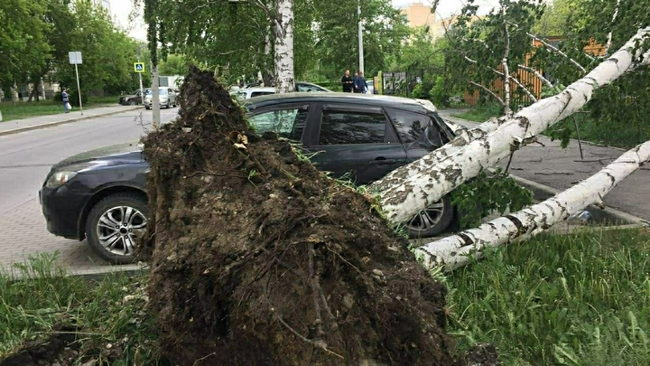 МЧС предупредило о грозах и сильном ветре в Свердловской области