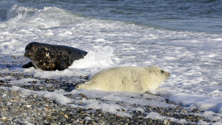 «Ты увидишь, он бескрайний»: Госдума рассмотрит проект о развитии круизного туризма в Арктике и на Дальнем Востоке