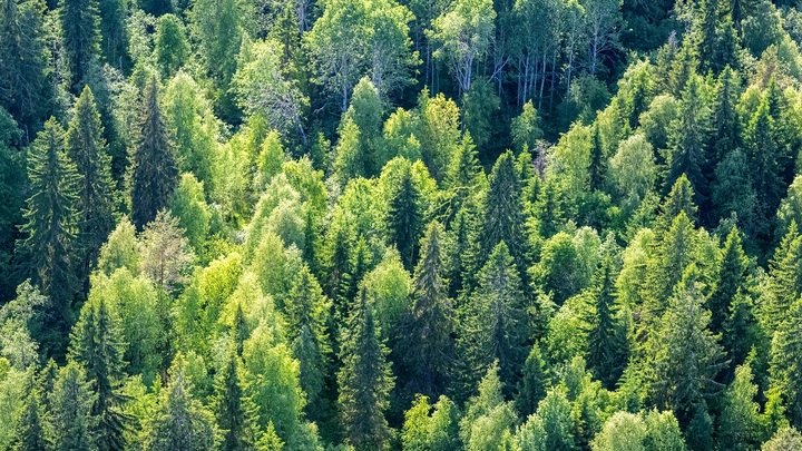 Заблудившийся в лесу белорус забрёл на территорию России и безнаказанно вернулся