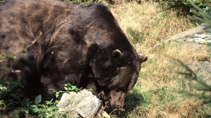 На медведя с подожжённой газетой: В Якутии пенсионерка в одиночку справилась со зверем