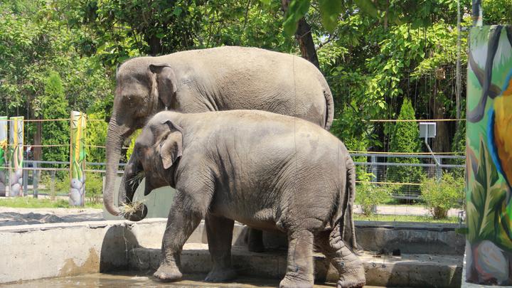 Ответили за слонёнка: Ростовский зоопарк исключили из Евроазиатской ассоциации