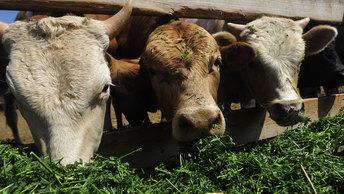 Есть ли будущее у сельского хозяйства?