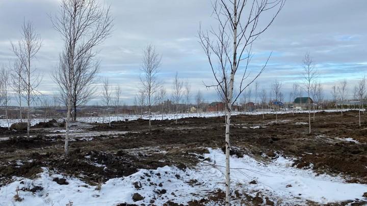 В Челябинске высадили 3113 деревьев, чтобы компенсировать вырубку в аэропорту